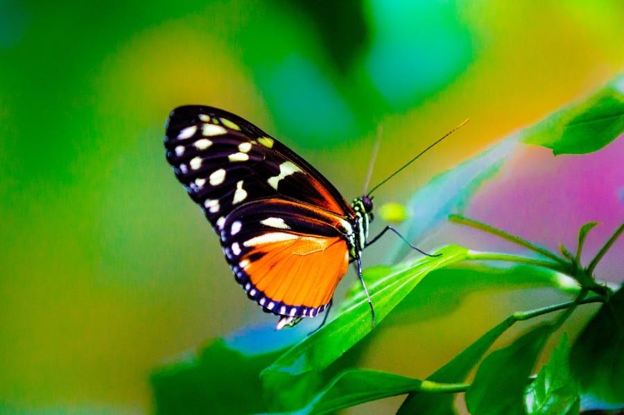 butterflies-3156109_1280