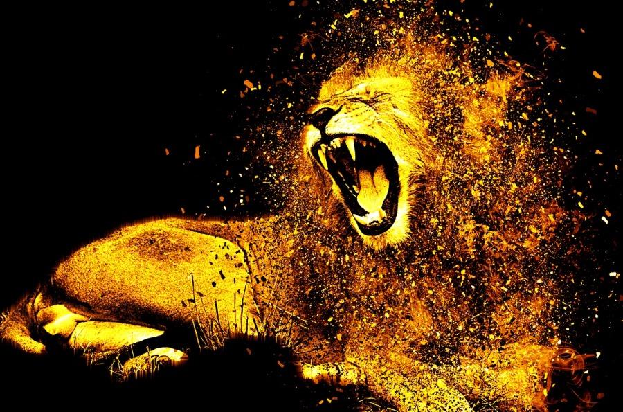 lion-1987846_1280